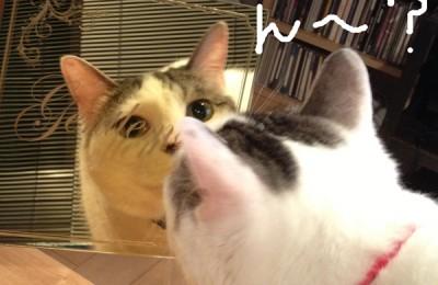 猫レポ:新商品「金ミラーアクリル」