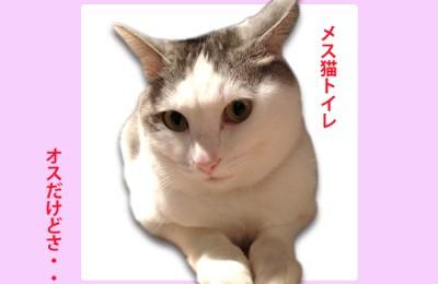 猫レポ:新商品「アクリル立体 正面型」トイレサイン