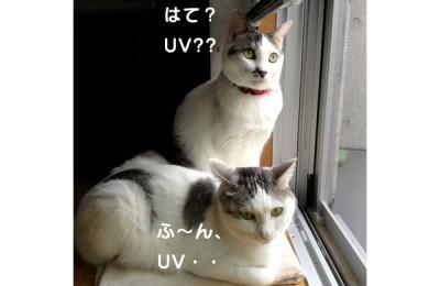 ねこでもわかる:UV印刷(初級)