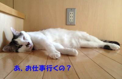 猛暑により、パタリと落ちている猫たち・・