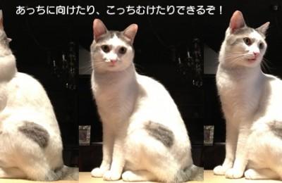 猫たちのお勧め☆L(´▽`L )♪ どこでもカウンター社名板!!
