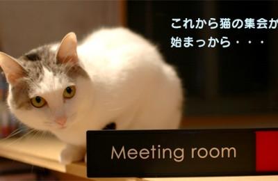 猫レポ:新商品「こじゃれちょる!!切替表示プレート!」