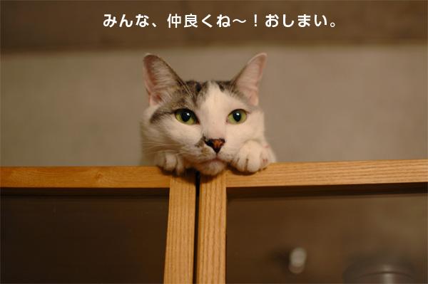 猫2匹キュウタロウ