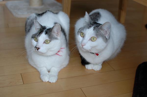 猫2匹仲良し