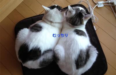 猫2匹と暮らす至福の光景
