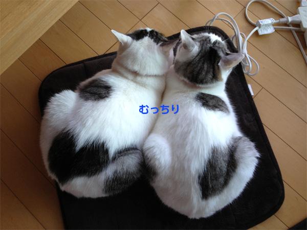 猫2匹むっちり