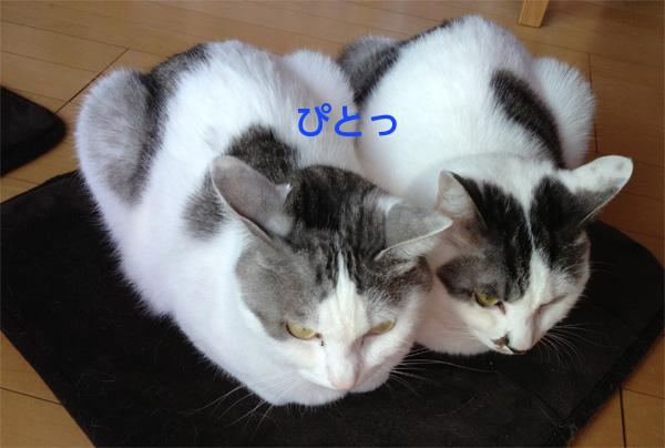 猫2匹ぴとっ
