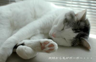 猫レポ:猫のライバル「動物ピクト」