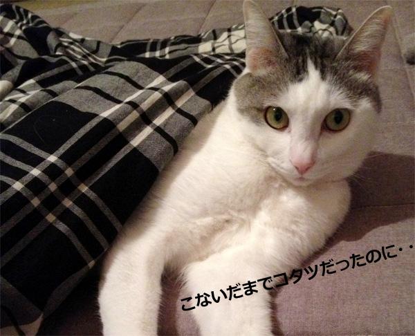 猫の熱中症対策3