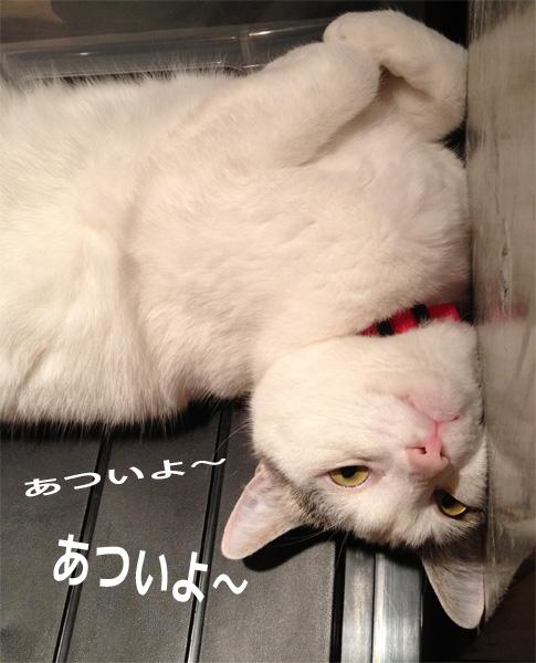 猫の熱中症対策1