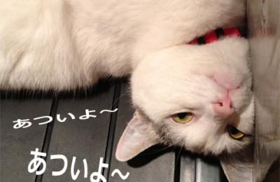 猫も喜ぶ熱中症対策(留守番ねこを守ります!)