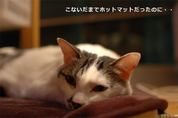 猫の熱中症対策2