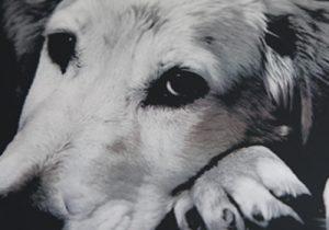 写真銘板 メタルフォト 犬アップ