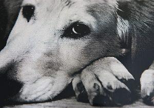写真銘板 犬のアップ