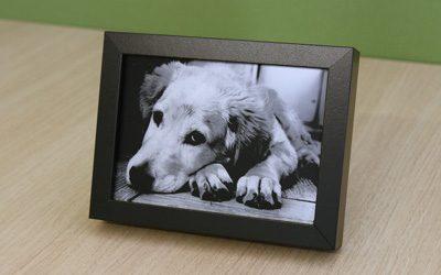 思い出の写真やアートを金属板に刻む「写真銘板」
